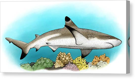 Black Tip Sharks Canvas Print - Black-tipped Reef Shark by Roger Hall