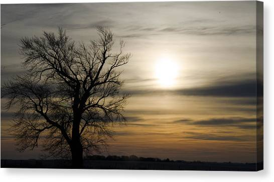Black Tree At Sunrise Canvas Print by Dan  Meylor