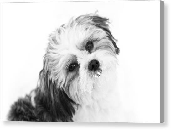 Black  White Puppy Canvas Print by Paulina Szajek