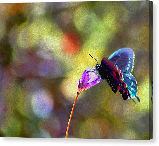 Canvas Print featuring the photograph Black Willowtail Butterfly by William Havle
