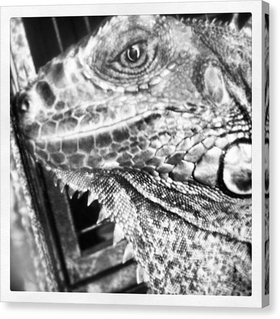Iguanas Canvas Print - #blackandwhite #bandw #petportraits by Theresa Kidd
