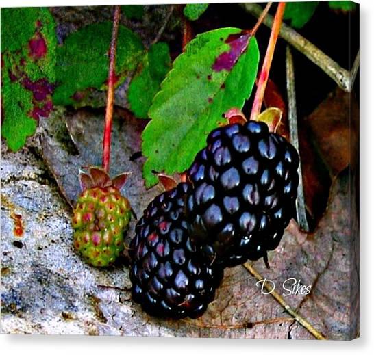 Blackberries Canvas Print by Debbie Sikes