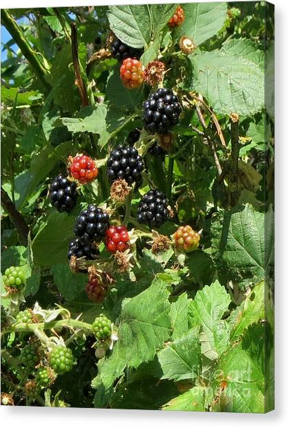 Wild Berries Canvas Print - Blackberries by Susanne Baumann