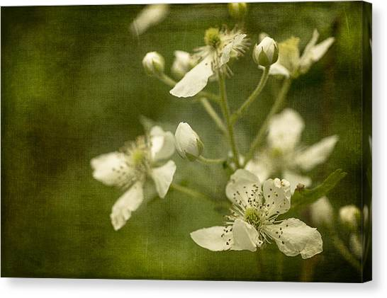 Blackberry Flowers With Textures Canvas Print