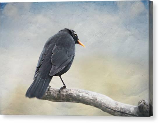 Storm Canvas Print - Blackbird by Heike Hultsch
