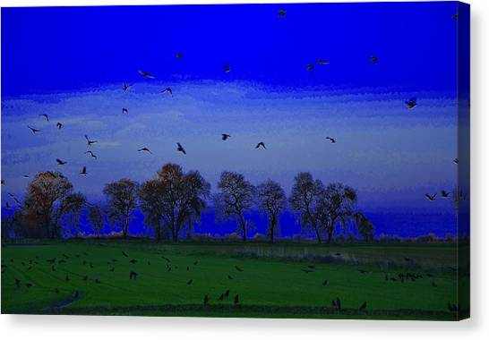 Blackbird Singing... Canvas Print
