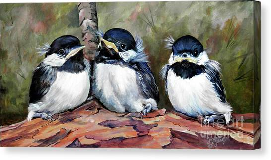 Chickadee Canvas Print - Blackcapped Chickadee Babies by Suzanne Schaefer
