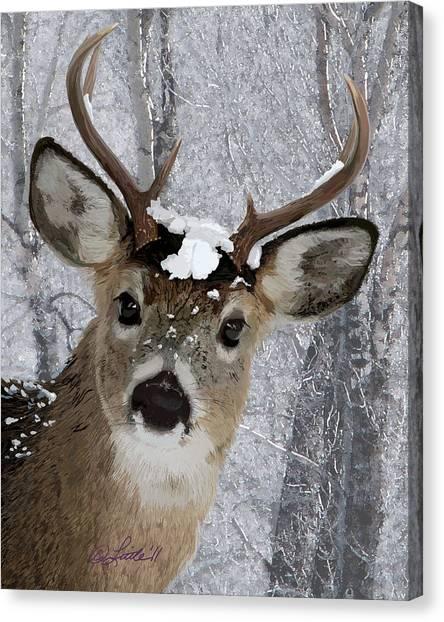 Blacktail Buck In Snow Canvas Print