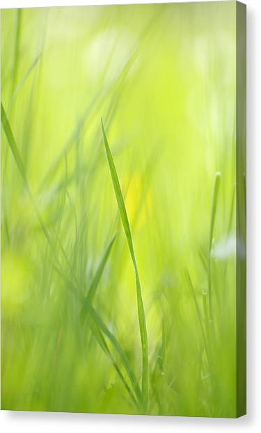 Blades Of Grass - Green Spring Meadow - Abstract Soft Blurred Canvas Print