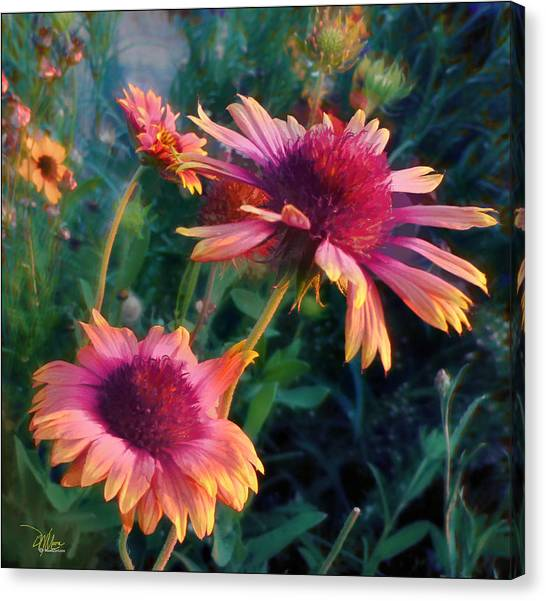 Blanket Flowers At Sunset Canvas Print