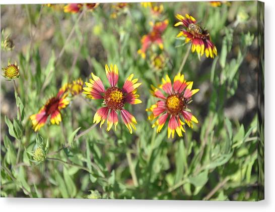 Blanketflower Canvas Print