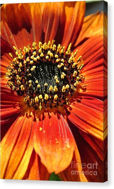 Blazing Sunflower Canvas Print