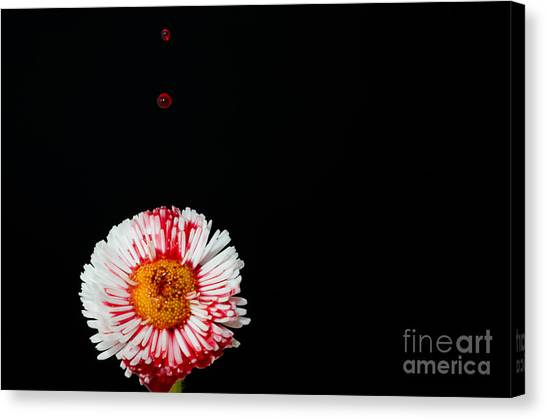 Bleeding Flower Canvas Print