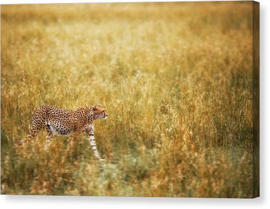 Cheetahs Canvas Print - Blending by Richard Susanto