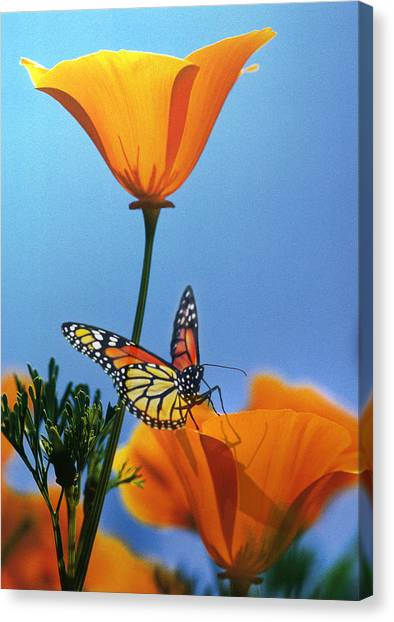 Blessed By The Sun Canvas Print
