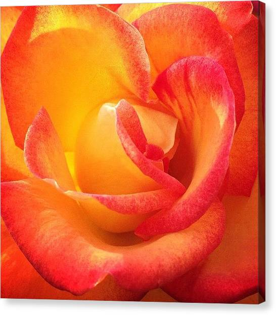 Red Roses Canvas Print - Blessed by Go Inspire Beauty
