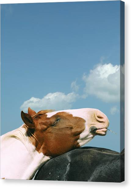 Funny Horses Canvas Print - Bliss by Leslie Heemsbergen