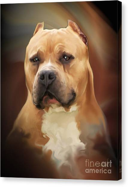 Blond Pit Bull By Spano Canvas Print