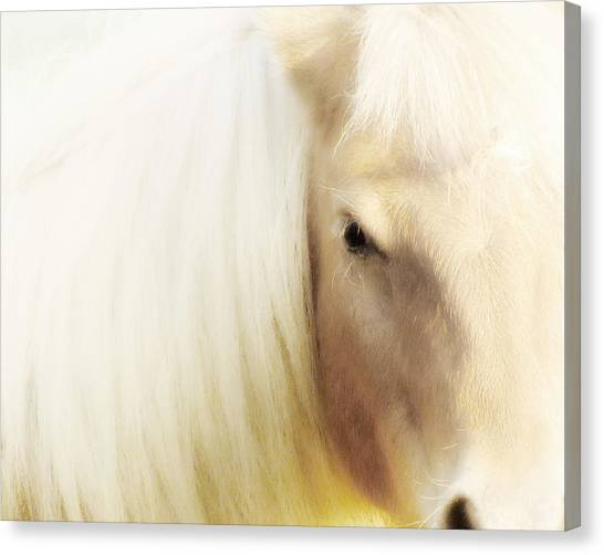 Dreamy Horse Canvas Print - Blondie by Amy Tyler