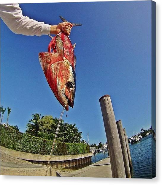 Tuna Canvas Print - Blood And Guts.... #gopro #bloody by Jason Spiewak