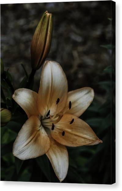Bloom And Bud Canvas Print