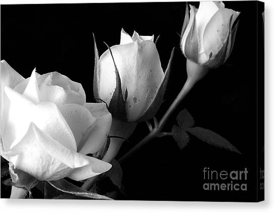 Bloomin' Roses Canvas Print