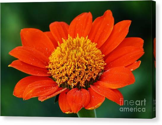 Blooming Flower Canvas Print