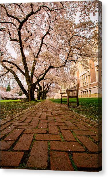 University Of Washington Canvas Print - Blooming Giants by Dan Mihai