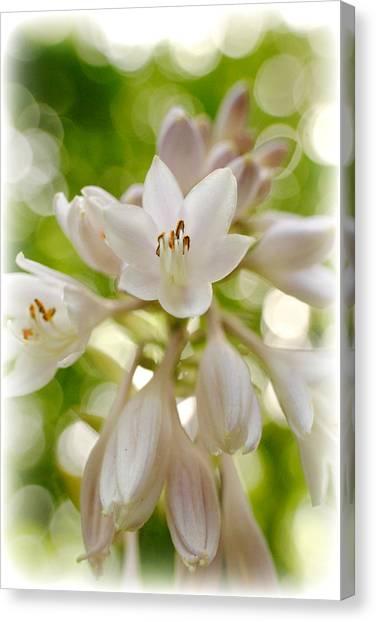 Blooming Hosta Canvas Print