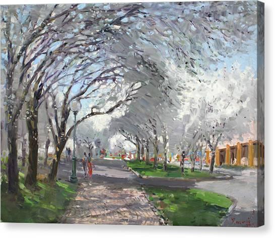 Blooming Tree Canvas Print - Blooming In Niagara Park by Ylli Haruni