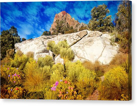Blooming Nevada Desert Near Ely Canvas Print