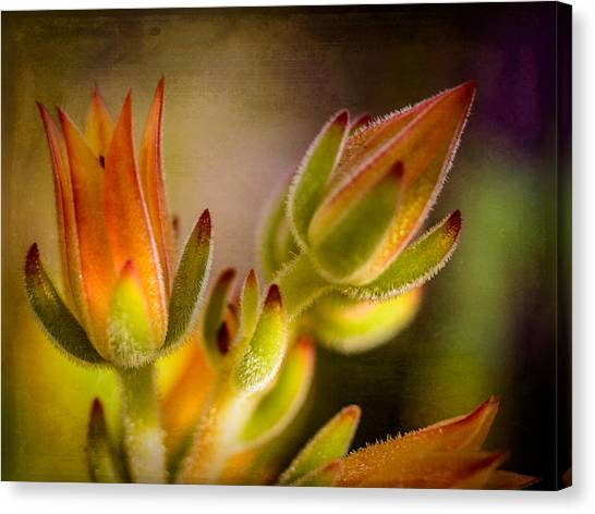 Blooming Succulents Iv Canvas Print