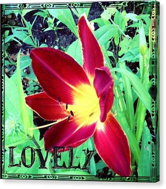 Gardens Canvas Print - #blooming This Morning. A #lovely #lily by Teresa Mucha