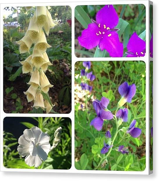 Gardens Canvas Print - Blooming Today. #foxgloves #spiderwort by Teresa Mucha