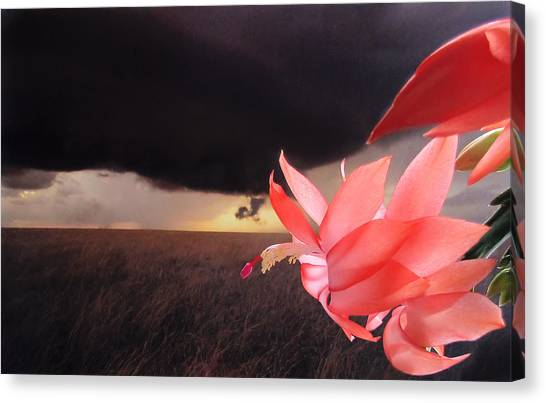 Blooms Against Tornado Canvas Print
