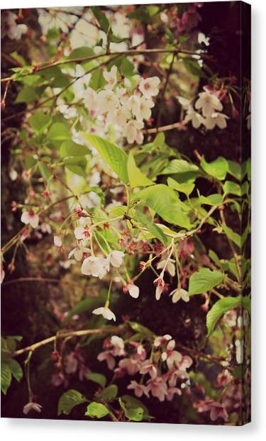 Blooms In The Branches Canvas Print by Cathie Tyler