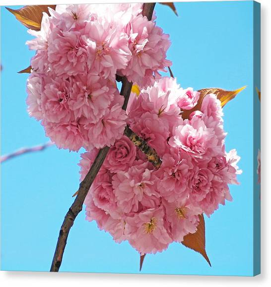 Blossom Bouquet Canvas Print