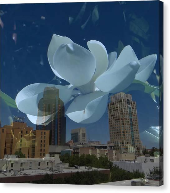 Blossom Rain 20 Canvas Print by Georg Kickinger