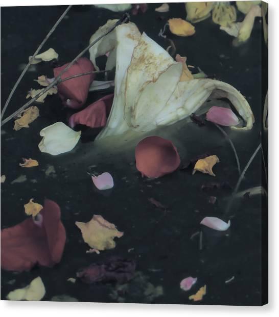 Blossom Rain 32 Canvas Print by Georg Kickinger