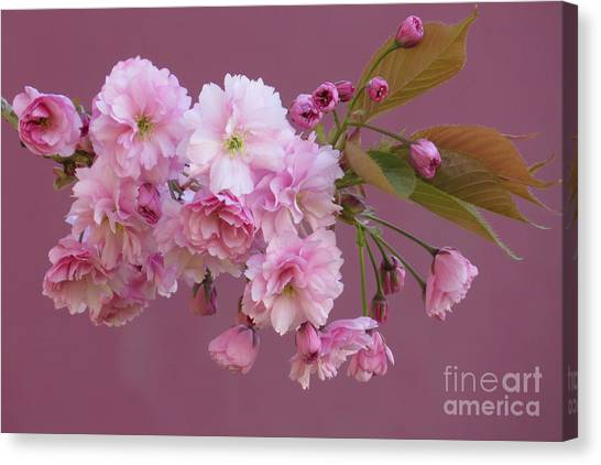 Blossom Standouts Canvas Print by Frank Townsley