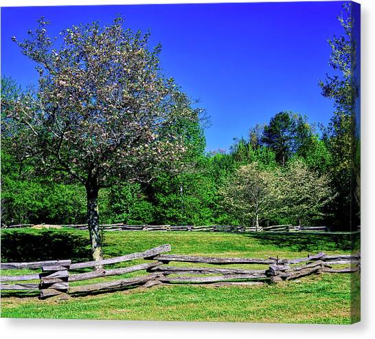 Pisgah National Forest Canvas Print - Blossom Trees In Farm, Davidson River by Panoramic Images