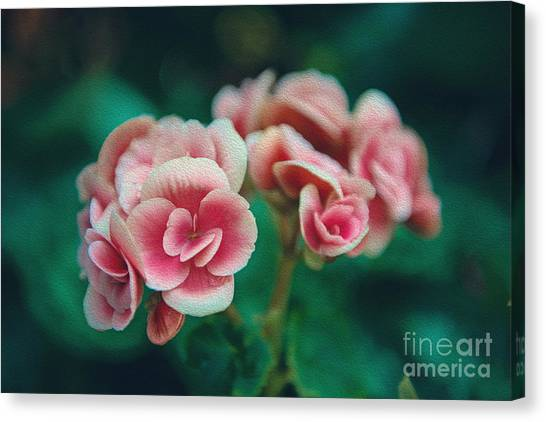 Canvas Print featuring the photograph Blossom by Yew Kwang