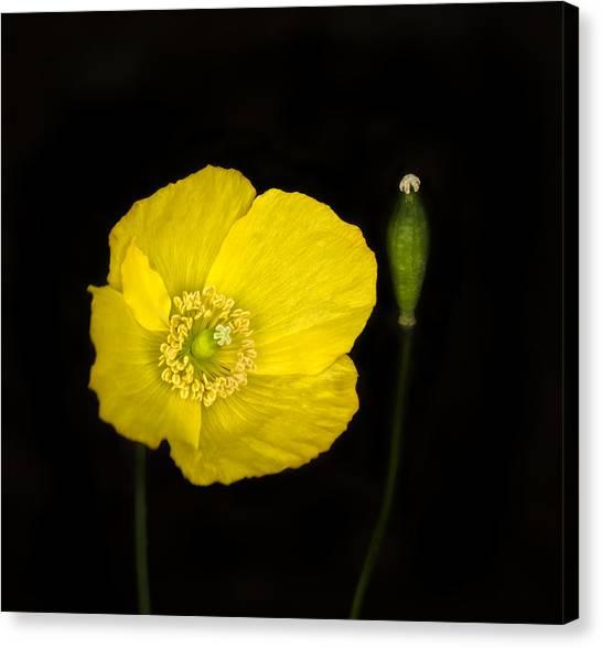 Yellow Poppy Canvas Prints (Page #11 of 222) | Fine Art America