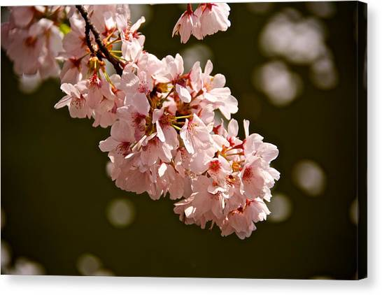 Blossoms And Petals Canvas Print by Kathi Isserman