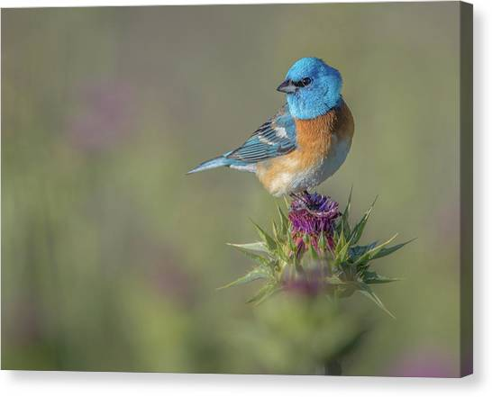 Buntings Canvas Print - Blowin' In The Wind by Greg Barsh