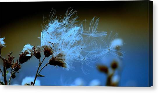 Blowing Away Canvas Print