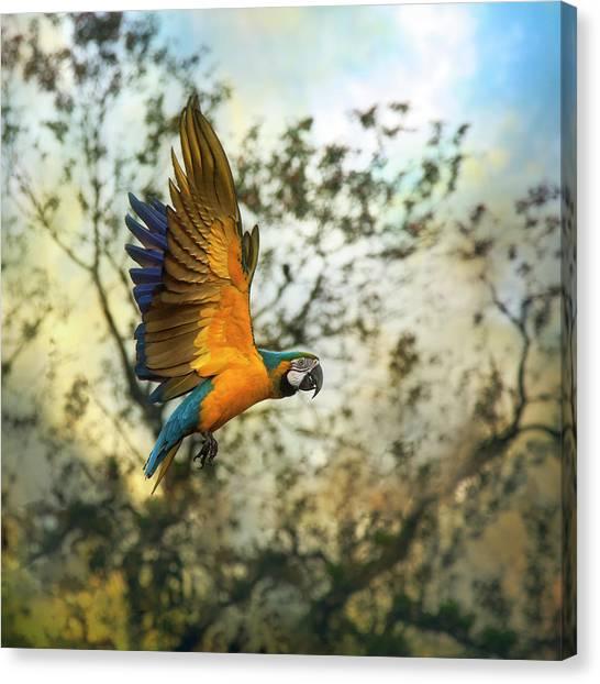 Macaw Canvas Print - Blue & Yellow Macaw by Istvan Kadar Photography
