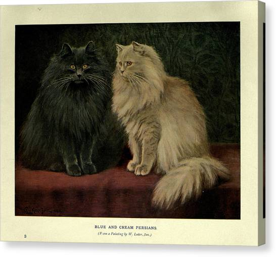 Manx Cats Canvas Print - Blue And Cream Persians by Philip Ralley