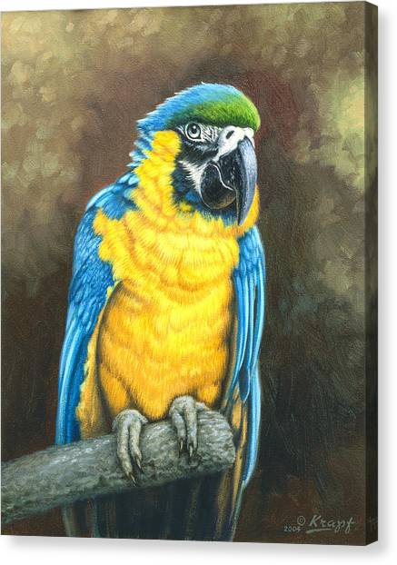 Macaws Canvas Print - Blue And Gold Macaw by Paul Krapf