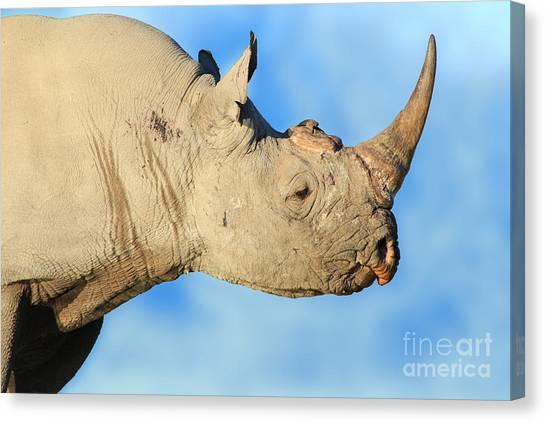 Blue Rhino Canvas Prints (Page #3 of 4)   Fine Art America